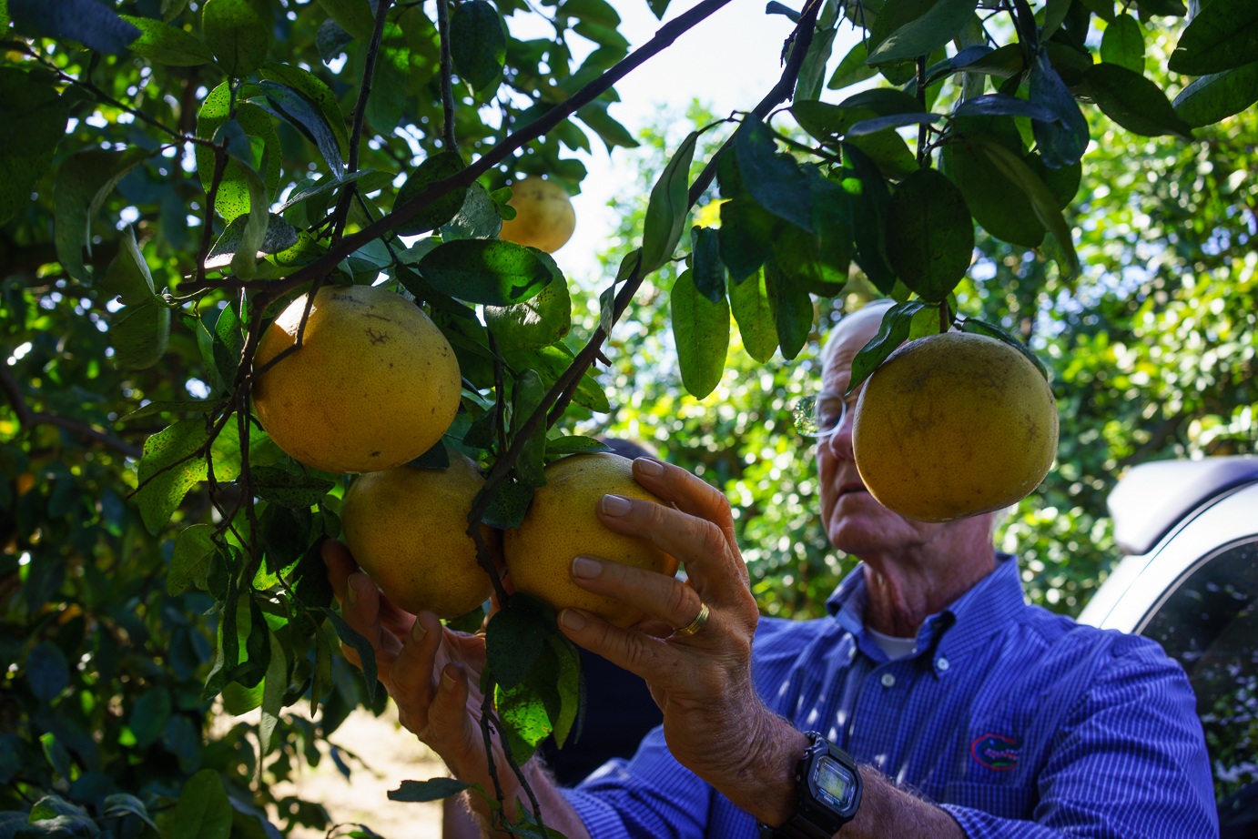 Uncle Matt's is one of our biggest Florida partners, providing pomelos (so so good) and various orange varieties like Sunburst and Cara Cara.